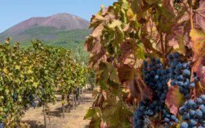 Rinascita Vesuvio: l'ente parco ci prova attraverso la produzione e…