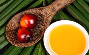 """Università Federico II: """"L'olio di palma non è dannoso"""""""