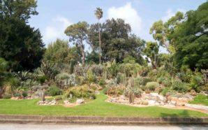 Festa dell'albero 2017 all'Orto Botanico di Napoli