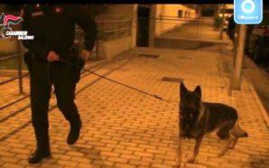 14 arresti per spaccio di droga: tra le piazze di…