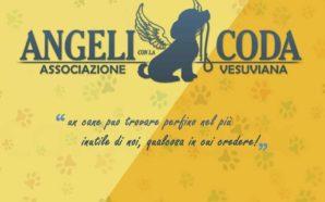 Gli angeli del territorio vesuviano contro il fenomeno del randagismo.